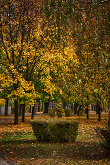 Golden Brown (3OPAHA) Tags: park autumn cacak serbia sony explore