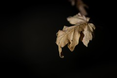 Time To Say Goodbye (wowafo) Tags: timetosaygoodbye nature natur blatt leaf fall herbst autumn makro macro sony alpha 6000