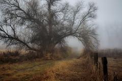 fog-11-28-18-54 (Ken Folwell) Tags: fog trees grass fence morning winter