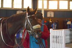 2018-11-30 (36) r9 #9 Variance (JLeeFleenor) Tags: photos photography md marylandhorseracing maryland marylandracing laurelpark horses thoroughbreds equine equestrian cheval cavalo cavallo cavall caballo pferd paard perd hevonen hest hestur cal kon konj beygir capall ceffyl cuddy yarraman faras alogo soos kuda uma pfeerd koin حصان кон 马 häst άλογο סוס घोड़ा 馬 koń лошадь outdoors outside