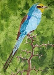 Abyssinian Roller (Neil Gaffney) Tags: njg2018 africa gambia turquoise green abyssinian roller abyssinianroller bird pier wiganpier wigan gidlow birch acrylic art painting gaffney neil neilgaffney
