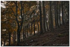 "Autumn (""Deca"") Tags: varese parcoregionalecampodeifiori campodeifiori boschi woods autunno autumn ottobre october colori colors alberi trees montagna mountain"