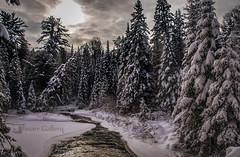 The Maker's Handiwork (Knarr Gallery) Tags: snow trees creek sun sunset sunrise dusk dawn forest bush crick river stream knarrgallery knarrphotography knarrgallerycom darylknarr beauty winter ice nikon d300 nikon18200mmvriiafs muskoka huntsville ontario