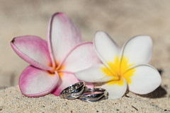 We got married in Mauritius! :) (Gergely_Kiss) Tags: beachmacro ringmacro frangepaniflowers frangepani weddingrings mauritiuswedding mauritius