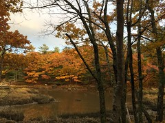 Fall ~ the colors of change (77ahavah77) Tags: fall autumn colors trees landscape nature outside river water leaves seasons change transformation process georgetown maine marsh coarising codependence community communion oneness diversity movement mystery creation form forms