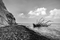 Nature goes down (Denmark) (Ondablv) Tags: møns klint denmark chalk cliffs scogliere promontorio danese møn mar baltico liselund parco naturale danimarca sea mare ondablv danish black white bianco nero bn