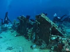 IMG_4381 (cdgobio) Tags: marrojo redsea 2018 sharkyolandareef