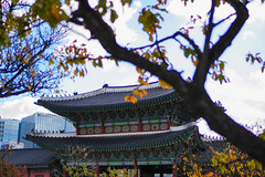 Palace (zzzyang__) Tags: sony sonyalpha landscape building a6300 architecture fall korea
