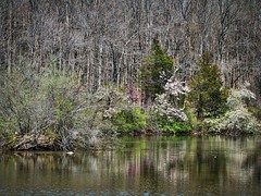 Memories of Spring (RandallMcRoberts) Tags: artphotography fineartphotography foliage lake reflection spring trees