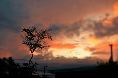 Sunset (Carlos A. Aviles) Tags: sunset ocaso atardecer dusk sky cielo naranja orange tree arbol clouds nubes
