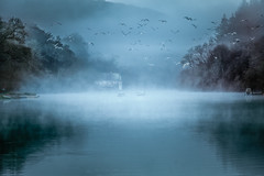 Gulls in Mist (Mick Blakey) Tags: lerryn lostwithiel abstract afloat atmospheric azure backlit blue bluehour bluesky boat boathouse boating boats calm cornish cornwall fog foggy gulls holidays mist misty reflections relaxing riverestuary serene silhouettes tidal tourists tranquil tranquility trees