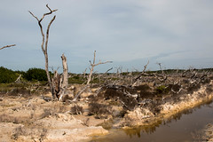 Birding in Laguna Rosada (Globalbirder) Tags: mexico campeche carbbeansea travelphotography pictravelvacationfernwehgulfofmexiconatureyucatan
