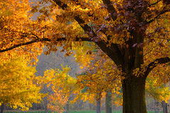 Fall Colors (Eric Tischler) Tags: autumn color fall leaves ohio trees golden yellow