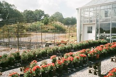 452955590030_30A (acylay) Tags: 35mm 35mmfilm filmphotography analog greenhouse horticulture plants