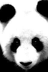 grand Panda (katia Nicolet) Tags: panda noirblanc nikon 5500 sigma 70300 parc animalier