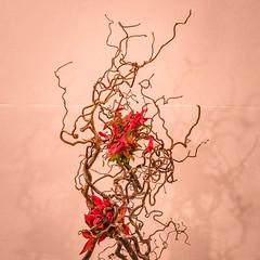 Folies flores-13 (Merlin H.) Tags: alsace hautrhin mulhouse fleur flowers foliesflores