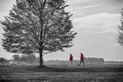 The walking red (Ruud.) Tags: ruudschreuder nikon nikond850 d850 bw zwartwit monochrome blackandwhite blackwhite