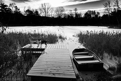 Lake Lily Winter (Greg Adams Photography) Tags: lake lily pa pennsylvania penna poconos dock winter boat submerged dogs reeds sunrise morning monochrome pikecounty snow ice labrador pitbull friends nature outdoors hhsc2000 2019 trees sky