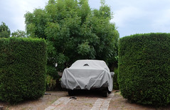 - (_barb_) Tags: australia melbourne frankston suburbia hedge car