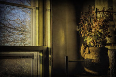 It's Still Summer Inside (joegeraci364) Tags: still life plant ivy frog planter window season winter summer warm altered interior house home color art abstract pane glass