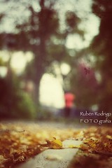 Fall in love with me (Mister Blur) Tags: fall autumn automne otoño paris parc montsouris love shallow depthoffield dof low pointofview pov profundidaddecampo distancia focal fallinlove withme fallen golden leaf leaves tim booth nikon d7100 50mm f18 rubén rodrigo fotografía snapseed nikkor