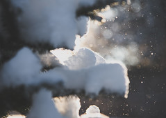 For Mae (HW111) Tags: crazytuesday blur bokeh evergreens snow sparkles sunlight tree winter hollywilson