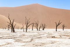 _RJS4668 (rjsnyc2) Tags: 2019 africa d850 desert dunes landscape namibia nikon outdoors photography remoteyear richardsilver richardsilverphoto safari sand sanddune travel travelphotographer animal camping nature tent trees wildlife