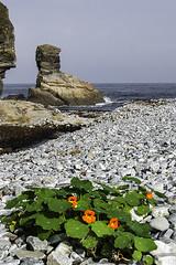 Portizuelo 2018 02 (fjcollada) Tags: marinas playas rocas flores naturaleza paisaje cielos asturias