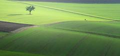 ... (a.penny) Tags: idsteiner land hessen germany taunus fuji finepix fujifilm x10 trees bäume feld