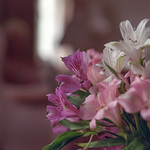 Flowers in the Front Room thumbnail