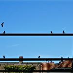 Birds on a Frame thumbnail