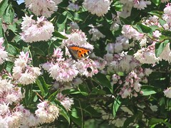 (Micheline Canal) Tags: allemagne bavière landscape paysage foret fleur animal maison papillon