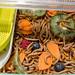 Nahaufnahme von Mehlwürmern mit Futtergemüse in Zuchtbox für Speiseinsekten