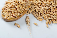 Oats grain, raw ears on a white background (wuestenigel) Tags: raw spoon natural whole closeup crop organic spikelet grain brown background healthy nutrition agriculture oatmeal plant vegetarian macro ingredient oat pile cereal heap health seed food view porridge white müsli wheat weizen samen lebensmittel gesundheit pasture weide barley gerste ernährung ernte noperson keineperson corn mais gesund dry trocken meat fleisch batch stapel ganze farming landwirtschaft straw stroh sunflower sonnenblume bread brot