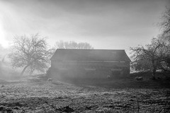 Noir et blanc ou..... (Isa-belle33) Tags: nature sheep mouton fujifilm trees arbres house maison capagne landscape bnw blackwhite blancetnoir blackandwhite monochrome fog foggy brouillard brume sunrise soleil
