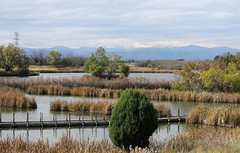 Overcast Skies (Patricia Henschen) Tags: rockymountainarsenal commercecity colorado nationalwildliferefuge denver park prairie wetland refuge clouds cloudy mountain mountains frontrange boardwalk autumn
