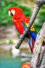 Waiting (gmmech) Tags: zoo bird d3400 nikon
