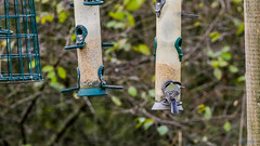 Marsh Lane Nature Reserve 3rd November 2018 (boddle (Steve Hart)) Tags: stevestevenhartcoventryunitedkingdomcanon5d4 marsh lane nature reserve 3rd november 2018 steve hart boddle steven bruce wyke road wyken coventry united kingdon england great britain canon 5d mk4 6d 100400mm is usm ii wild wilds wildlife life natural bird birds flowers flower fungii fungus insect insects spiders butterfly moth butterflies moths creepy crawley winter spring summer autumn seasons sunset weather sun sky cloud clouds panoramic landscape solihull unitedkingdom gb