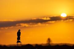 Osprey Sunset (newretreads42) Tags: osprey eagle sunset sunshinecoast kawana pointcartwright bird sun clouds animals wildlife queensland australia