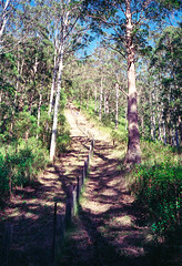Mt Clunie 2 - route along the border track (NettyA) Tags: 1993 australia mainrangenationalpark mtclunie qld queensland bushwalk bushwalking scannedprint scenicrim seqld analogue