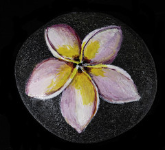 Painted Pink And Yellow Flower On A Rock (Bill Gracey 22 Million Views) Tags: maria rockpainting offcameraflash homestudio tabletopphotography macrolens color colorful painting yongnuo yongnuorf603n blackbackground perspex acrylicpaint softbox lastoliteezbox lakeside pink yellow sidelighting filllight