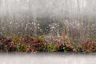 Shore in the mist