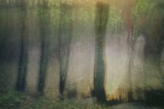Winter Foliage (Ger208k) Tags: ireland dublin stannespark icm intentionalcameramovement multipleexposure nature trees foliage colour abstract gerardmcgrath