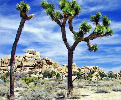Desert Sky, JoshuaTree NP 4-13