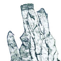 Broken (Jutta Vollmer) Tags: macro abstract damaged macromondays transparence