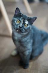 『貓貓喵丫』啤啤,別嚇我,我後面是不是有什麼🙈🙈🙈 #sel55f18z #cat #sonya7iii #catsofinstagram (Joey0124) Tags: sonya7iii sel55f18z cat catsofinstagram