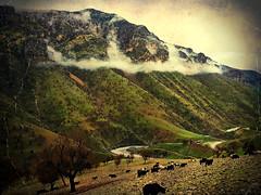 💛❤💚 - K U R D I S T A N (Kurdistan Photo كوردستان) Tags: کوردستانی کورد kurdistan کوردستان land democratic party koerdistan kurdistani kurdistán kurdistanê zagros zoregva zazaki zaxo zindî azadî azmar xebat xaneqînê christianity cegerxwin van love mahabad music arbil democracy freedom genocide herêmakurdistanê hawler hewler hewlêr halabja herêma judaism jerusalem kurdistan4all lalish qamishli qamislo qamishlî qasimlo war erbil efrînê refugee revolution rojava referendum yezidism yazidis yârsânism unhcr peshmerga peshmerge grass tree landscape field sky water river animal mountain rock mi people photo