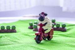 Smile... every day (ipomar47) Tags: smileonsaturday sheep oveja juguete toy motocicleta moto bike motorbike cycle sonrie smile macro macrofotografia photomacrography macrography macrophotography closeup