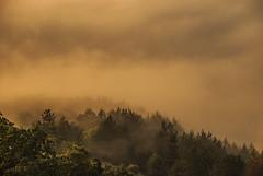 Misty morning (stefan.pavic1) Tags: mist misty morning tree trees nature sunrise goldenhour nikon d80 colors explore outdoor photo photography naturephoto