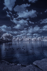 Clouds And Waterfowl At Lindo Lake - Infrared (Bill Gracey 22 Million Views) Tags: infrared infraredphotography convertedinfraredcamera ir channelswapping lindolake lakeside clouds vegetation water sky highcontrast nature surreal composition reflections trees